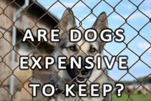 Are dogs expensive to keep?