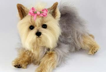 Are Yorkshire Terriers curious dogs?