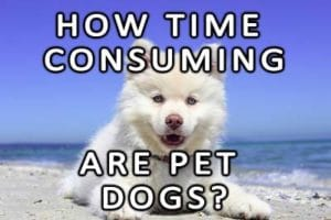 Is owning a dog time consuming?