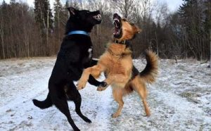 What to do if my dog gets into a fight?