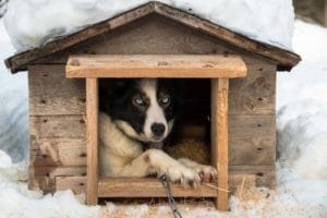 10 Best doghouses (Which one should I buy)