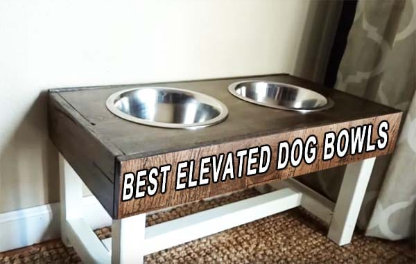raised dog bowls