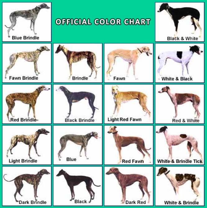 greyhounds color chart