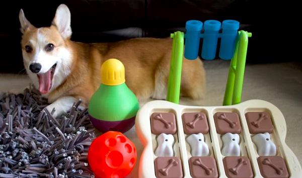 best dog toys for boredom