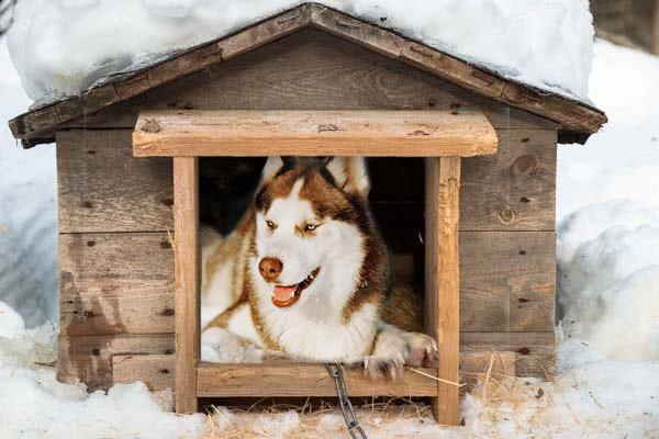dog houses for huskies