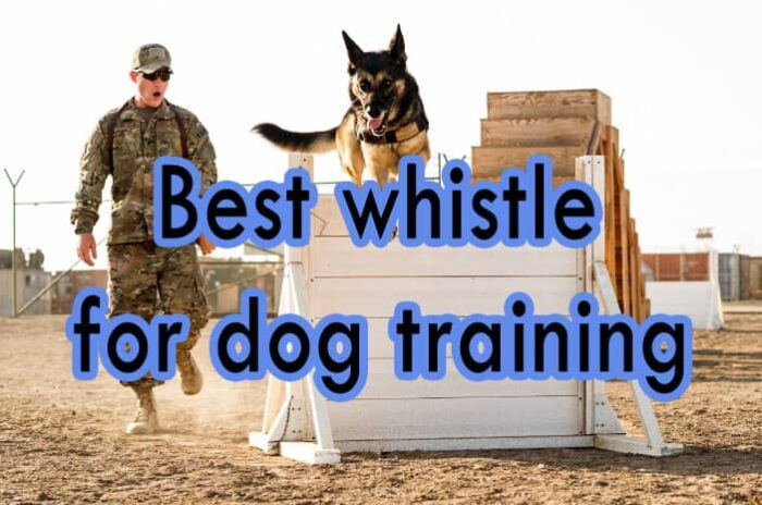 Best whistles for dogs