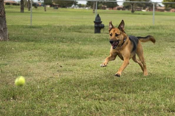 best ball launcher for dogs