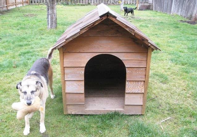 best dog houses for gardens